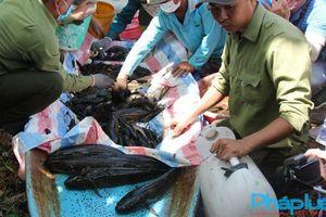 Vô rừng U Minh Hạ chụp đìa bắt cá