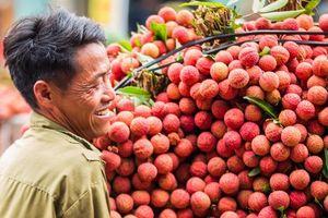 Hơn 100 thương nhân Trung Quốc được vào Việt Nam mua vải thiều