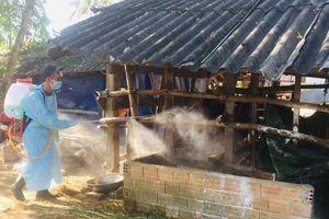 Nguy cơ lây lan bệnh viêm da nổi cục trên trâu, bò tại Quảng Ngãi