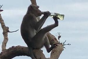 Khám phá Top 5 'tiên tửu' trong thế giới động vật hoang dã
