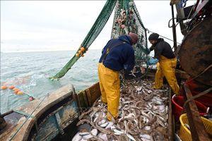 Vấn đề Brexit: Pháp phản đối Anh áp dụng quy định mới về đánh bắt cá