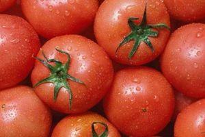 Muốn chọn được cà chua tươi ngon, mọng nước cần xem kỹ 4 điểm này