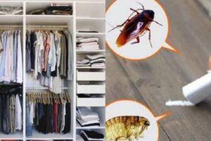 8 lý do khiến ngôi nhà trở thành nơi trú ẩn của vi khuẩn, côn trùng