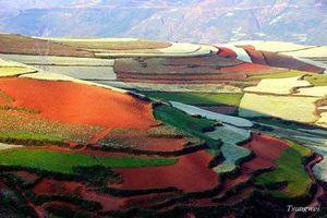 Vẻ đẹp 7 sắc cầu vồng quyến rũ của cánh đồng ở Trung Quốc