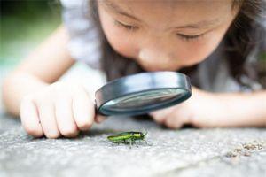 3 biểu hiện 'khó đỡ' khi trẻ còn nhỏ chứng tỏ con rất thông minh, lanh lợi