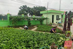 Những 'Vườn rau cho bé' trong trường mầm non