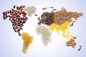 Loạt doanh nghiệp niêm yết bị 'bóp nghẹt' lợi nhuận vì giá lương thực tăng sốc