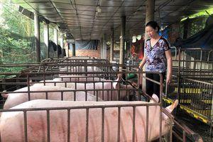 Xây dựng vùng an toàn dịch bệnh trong chăn nuôi