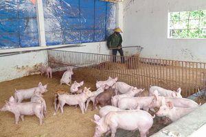 Bảo vệ môi trường trong chăn nuôi