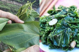 Lá ngón xào tỏi - món đặc sản ở Lai Châu hiếm ai dám ăn vì sợ trúng độc