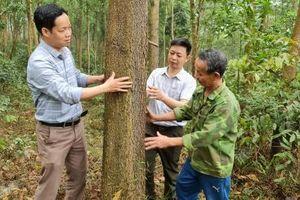 Vựa rừng xứ Tuyên: Rừng xanh lấn núi trọc, đồi hoang