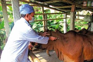Thiên tai, dịch bệnh gây thiệt hại tại nhiều địa phương
