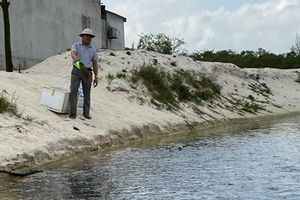 Làm giàu từ nghề nuôi cá lóc trên cát