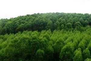Nhà nước giao rừng đặc dụng và rừng phòng hộ không thu tiền sử dụng rừng với đối tượng nào?