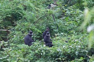 Tôn vinh những 'người hùng' bảo tồn loài hoang dã giai đoạn 2010-2020