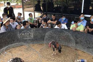 Cảnh sát bắt 47 đối tượng đá gà ăn tiền trong khuôn viên biệt thự ở Huế