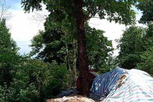 Điện Biên: Trú mưa dưới gốc cây, công nhân bị sét đánh văng xuống taluy âm