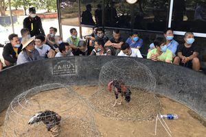 Triệt phá trường gà bên trong biệt thự vườn tại Huế