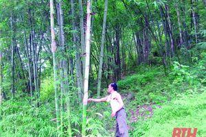 Phân bổ vốn ủy thác trồng rừng thay thế cho các địa phương trên địa bàn Thanh Hóa