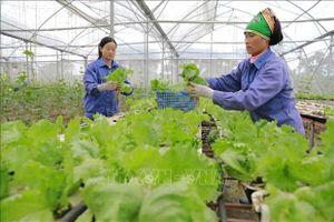 Nhiều lợi ích từ các loại rau ăn lá