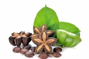 Khảo sát các điều kiện thu hồi dầu từ hạt cây Sacha inchi (Sachi) trồng tại Việt Nam bằng phương pháp cơ học
