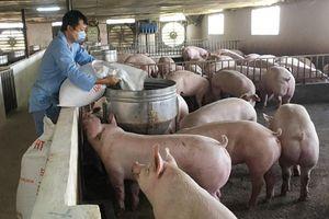 Đẩy mạnh việc thống kê đàn vật nuôi