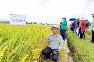 Những giống lúa chất lượng thích hợp sản xuất 2 vụ của Vinaseed
