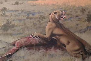 Phát hiện loài 'mèo ma' cổ quái to như gấu, vồ mồi khỏe hơn sư tử