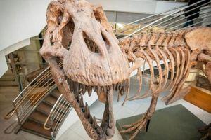 Phát hiện mới thú vị về khủng long bạo chúa Tyrannosaurus rex