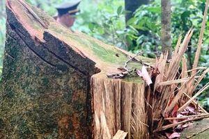 Vụ 'cắt xén' tiền bảo vệ rừng ở TT-Huế: Dân trích đến 65%, xã 'mượn' chi 153 triệu đồng
