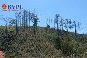 Để xảy ra thiệt hại tài nguyên rừng, 128 dự án phải bồi thường 336 tỉ đồng