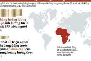 Nguy cơ xảy ra khủng hoảng lương thực toàn cầu