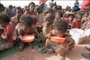 155 triệu người bị đói trong năm 2020, cao nhất 5 năm qua