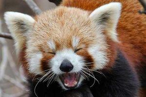 Khi động vật 'mỉm cười' và khiến một ngày của bạn tươi sáng hơn
