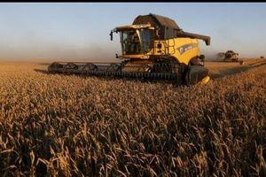 Senegal đặt mục tiêu tăng sản lượng ngũ cốc và cây công nghiệp
