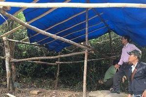 Vô cớ hành hung kiểm lâm và nhân viên bảo vệ rừng
