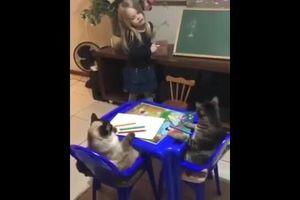 Mèo chăm chú nghe bé gái giảng bài