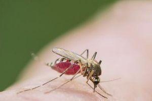 Phát triển thuốc đuổi côn trùng bằng cách giấu mùi hương trên da