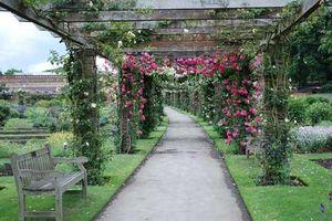 Khám phá vườn thực vật hoàng gia Kew - đẹp nhất nước Anh
