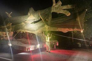 Truy bắt xe chở cây 'khủng' lúc nửa đêm