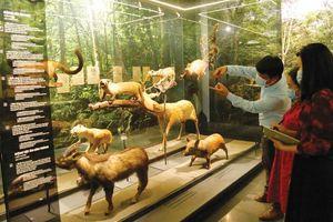 Công nghệ - 'thỏi nam châm' hút khách đến bảo tàng