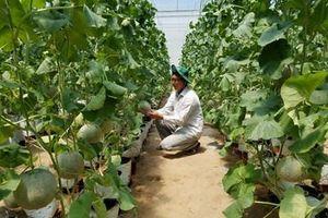 Chuyển đổi cây trồng thích ứng khô hạn