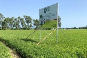Viện lúa như một 'thánh đường trồng lúa', Viện Cây ăn quả phải đa chức năng