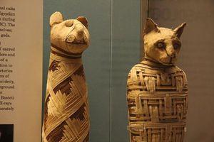 Người Ai Cập cổ đại cưng chiều những động vật nào?