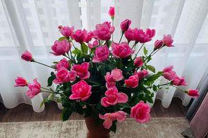 Những lời chúc ý nghĩa dành cho Ngày của Mẹ