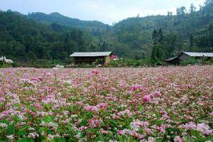 5 điểm đến mùa 'đẹp ngỡ ngàng' ngay tại Việt Nam, nên đi ngay kẻo lỡ