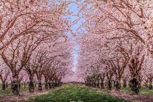 Khung cảnh mùa xuân ở đâu đẹp nhất trên hành tinh này?