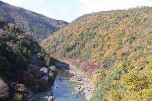 Ngắm mùa thu Nhật Bản trên tuyến tàu xuyên núi