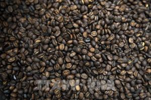 Giá cà phê thế giới giảm sau đợt tăng giá kéo dài