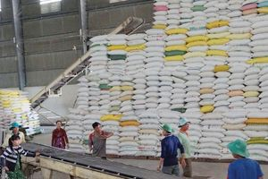 Tận dụng cơ hội cho xuất khẩu gạo